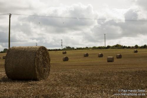 Dorset Hay Bales
