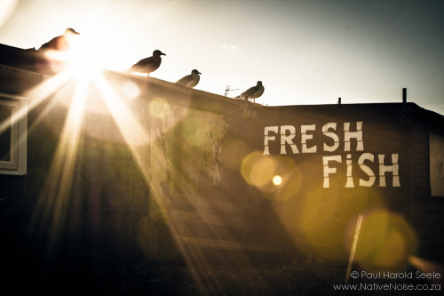 Seagulls on a Fresh Fish Shop in Hastings, United Kingdom