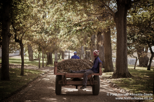 Farm workers on a tractor, Constantia, South Africa
